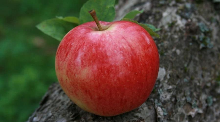 Gyűjtse össze az alma értelmezését az álomkönyvből. Miért álmodik almát szedni?