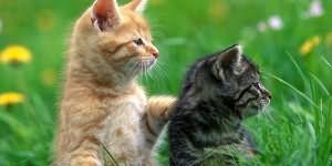 crna mokra otvorena maca samo azijski pornić