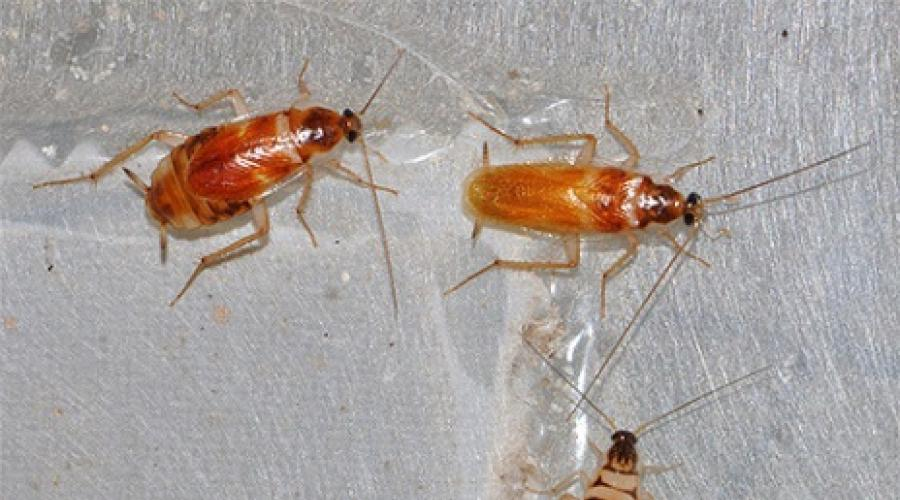 különféle típusú rovarok