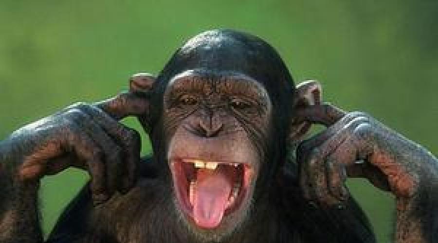 Az első beszélő majom