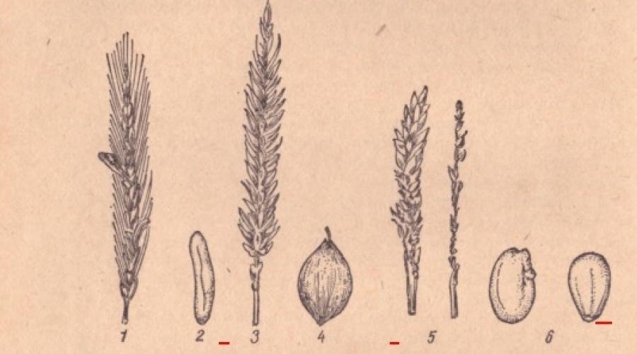 kereskedelem gabona elfogadás)